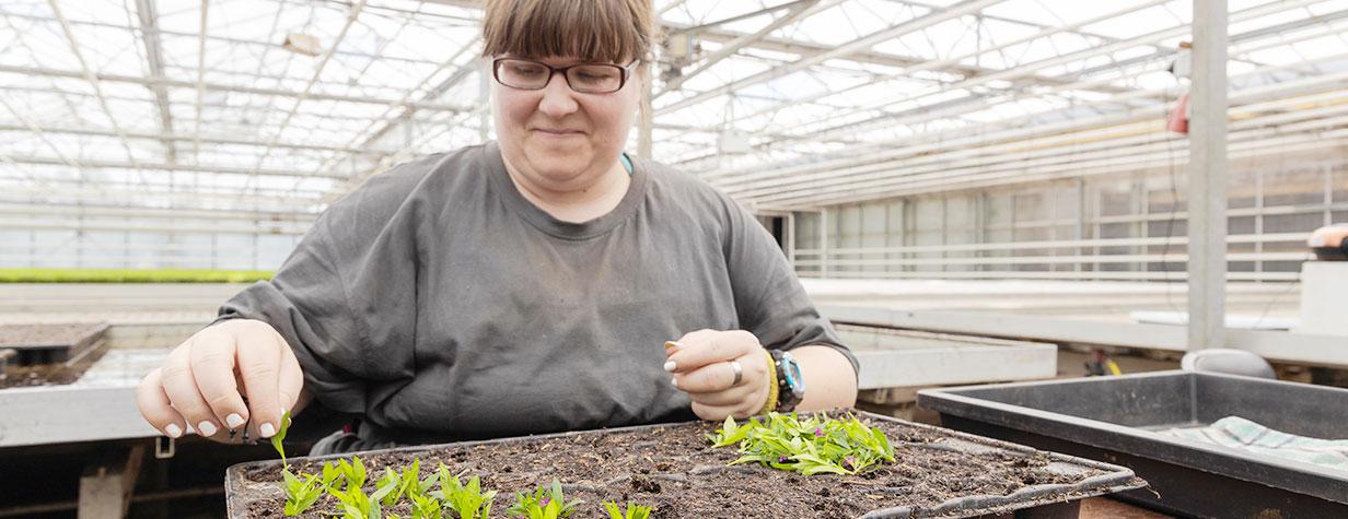 Zierpflanzenbau und Florantas - Kunde werden bei Haus Freundeberg